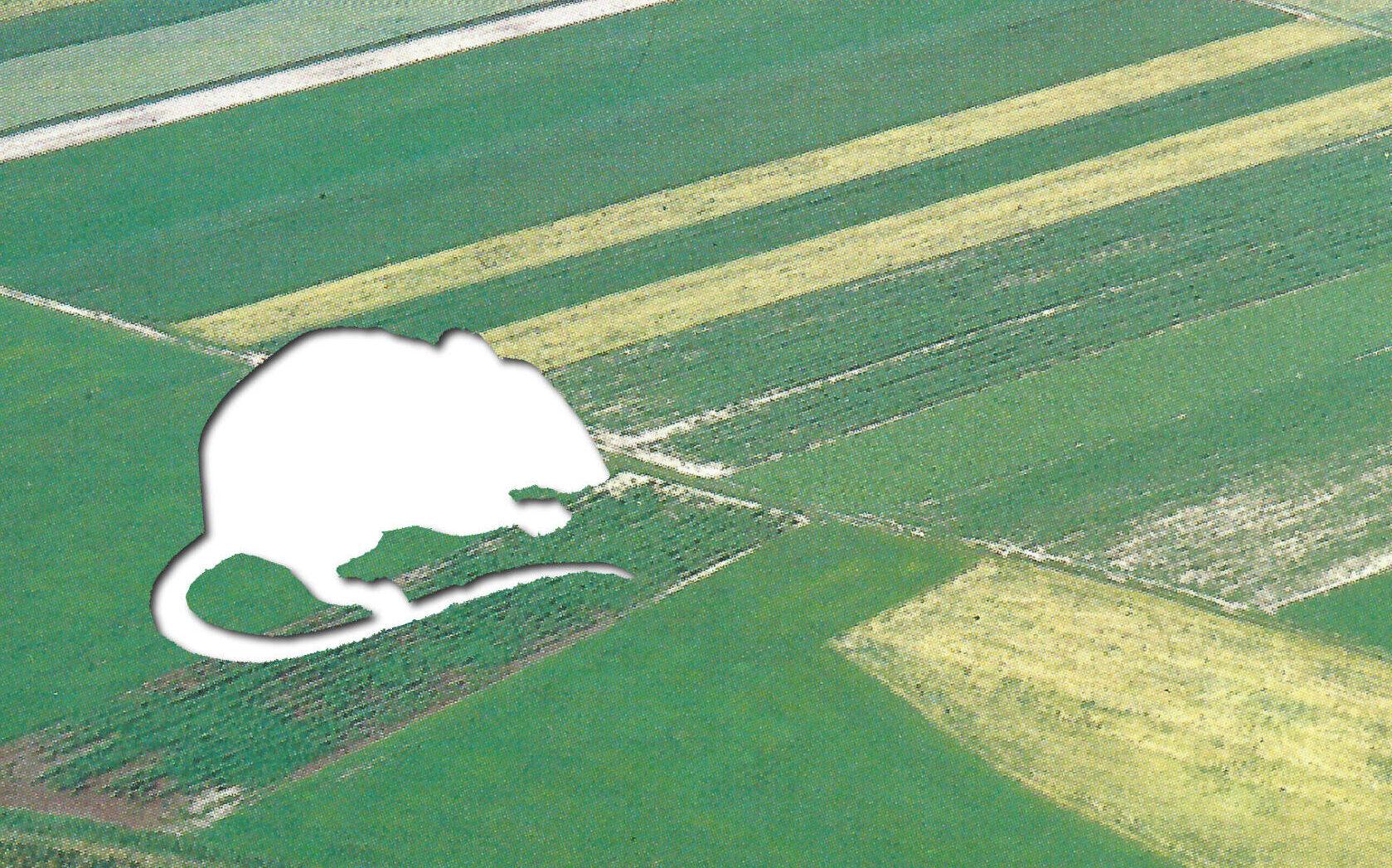 Think Tiger, act Haselmaus! Wie geht es eigentlich den Tieren Schleswig-Holsteins?